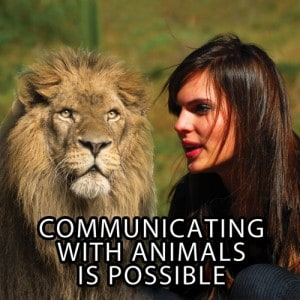 animal communicators