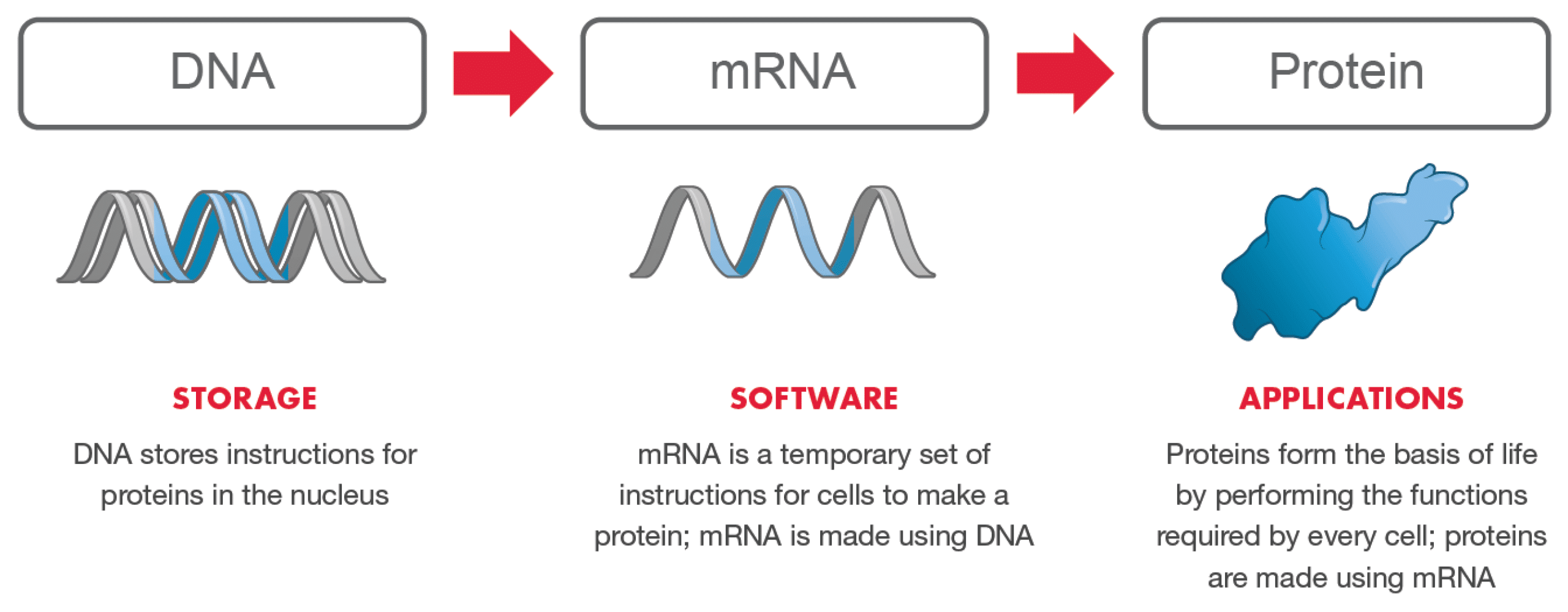 mRNA vaccine COVID software of life